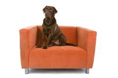 Hund saß auf Stuhl Lizenzfreies Stockfoto