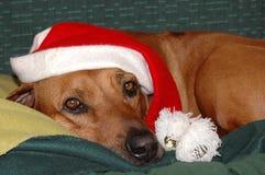 hund santa Royaltyfri Bild