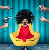 Hund am Schönheitssalon Stockbild