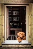 Hund, schauend aus Fenster heraus lizenzfreie stockfotos