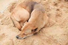 Hund schläft ein Lizenzfreie Stockfotos