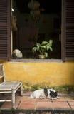 Hund schläft unter Fenster Stockbild