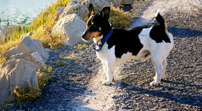 Hund Schwarzweiss lizenzfreies stockfoto