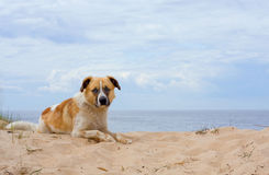 Hund am Seeufer lizenzfreie stockfotos