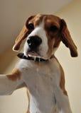 Hund-selfie Stockbild