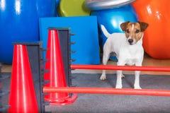 Hund-shool Lizenzfreie Stockfotos