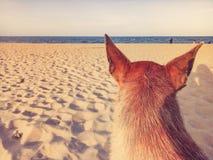 Hund sitzen auf schlechten sandigen Stränden mit glücklichem Feiertagshintergrund des blauen Seeklaren Himmels lizenzfreies stockfoto