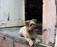Hund sitzt durch die Tür Stockfotografie