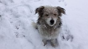 Hund sitzt im Schnee mit Schnee auf dem Gesicht Hund im Schnee beautifull HundewarteLebensmittel stockfotos