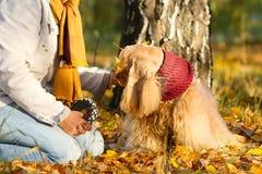 Hund sitzt mit Eigentümer nahe einem Baum auf den gelben Blättern Stockfotos