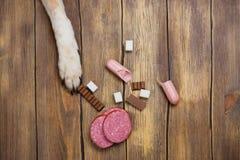 Hund som äter förbjuden mat Sjukligt mål för djur royaltyfria bilder