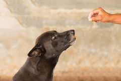 Hund som äter mat i selektiv fokus för hand Arkivbilder
