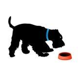 hund som äter matfoxterrier Royaltyfria Foton