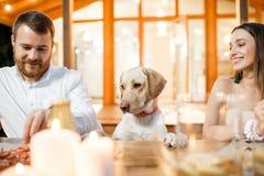 Hund som äter middag med folk nära huset royaltyfri fotografi