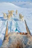 Hund som åka släde i Grönland Arkivbilder