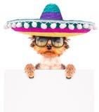 Hund som bär en mexikansk hatt med banret Royaltyfria Bilder
