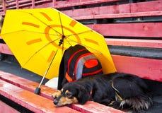 Hund som bevakar saker och väntar ägaren Royaltyfri Foto