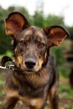 Hund som in camera ser arkivbild