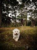 Hund som den nya konungen av djungeln arkivbild