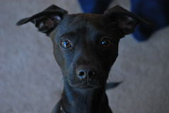 Hund som en kameramodell Royaltyfri Bild
