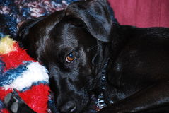 Hund som en kameramodell fotografering för bildbyråer