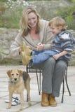 hund som får klar att gå Royaltyfri Fotografi