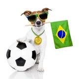 Hund som fotboll med medaljen och flaggan royaltyfri foto