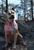 Hund som fotvandrar på bergslingor Arkivbilder