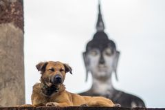 Hund som framme ligger av en buddha staty arkivbilder