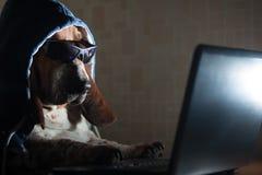 Hund som framme sitter av datoren Royaltyfri Bild