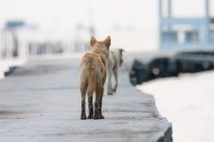 Hund som går på den konkreta bron Arkivfoto