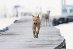 Hund som går på den konkreta bron Fotografering för Bildbyråer
