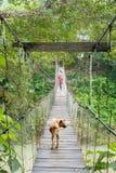 Hund som går på upphängningbron i Tangkahan, Indonesien Royaltyfri Fotografi