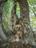 Hund som går till och med hålet i trädstam Arkivbild