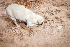 Hund som gräver hans huvud i sanden arkivbild