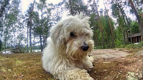 Hund som håller ögonen på dig! royaltyfri fotografi