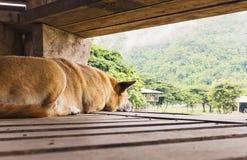 Hund som håller ögonen på elefanterna Royaltyfri Bild