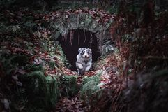 Hund som hoppar i djungeln arkivbild