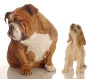 hund som ignorerar den yappy valpen Royaltyfria Bilder
