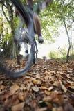 Hund som jagar mannen på mountainbiket royaltyfri foto
