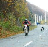 Hund som jagar motorcyklar och ryttare för KTM Enduro Royaltyfria Bilder