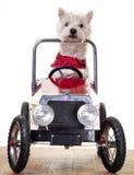 Hund som kör en bil arkivfoton