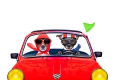 Hund som kör en bil arkivfoto