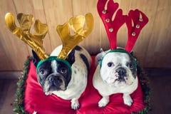 Hund som kläs för jul Arkivfoto