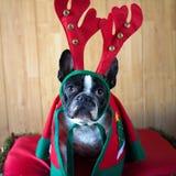 Hund som kläs för jul Arkivbild