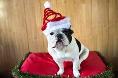 Hund som kläs för jul Royaltyfria Foton