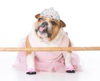 Hund som kläs som en ballerina fotografering för bildbyråer