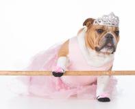 Hund som kläs som en ballerina royaltyfri foto