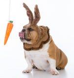hund som kläs som en kanin Royaltyfria Bilder