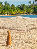 Hund som kyler i stranden Royaltyfri Fotografi